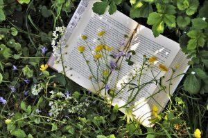 Semana de Ecoactividades y I Feria del Libro de Torreblanca